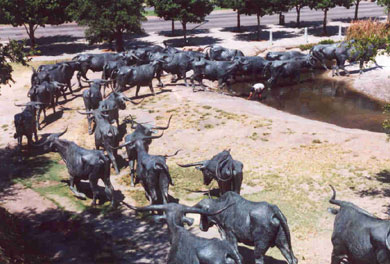 Picture of Cattle Herd in Downtown Dallas