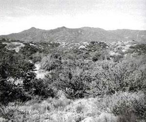 Picture of Signal Peak
